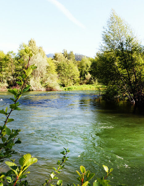 IMG_4467-steven-addington-photography